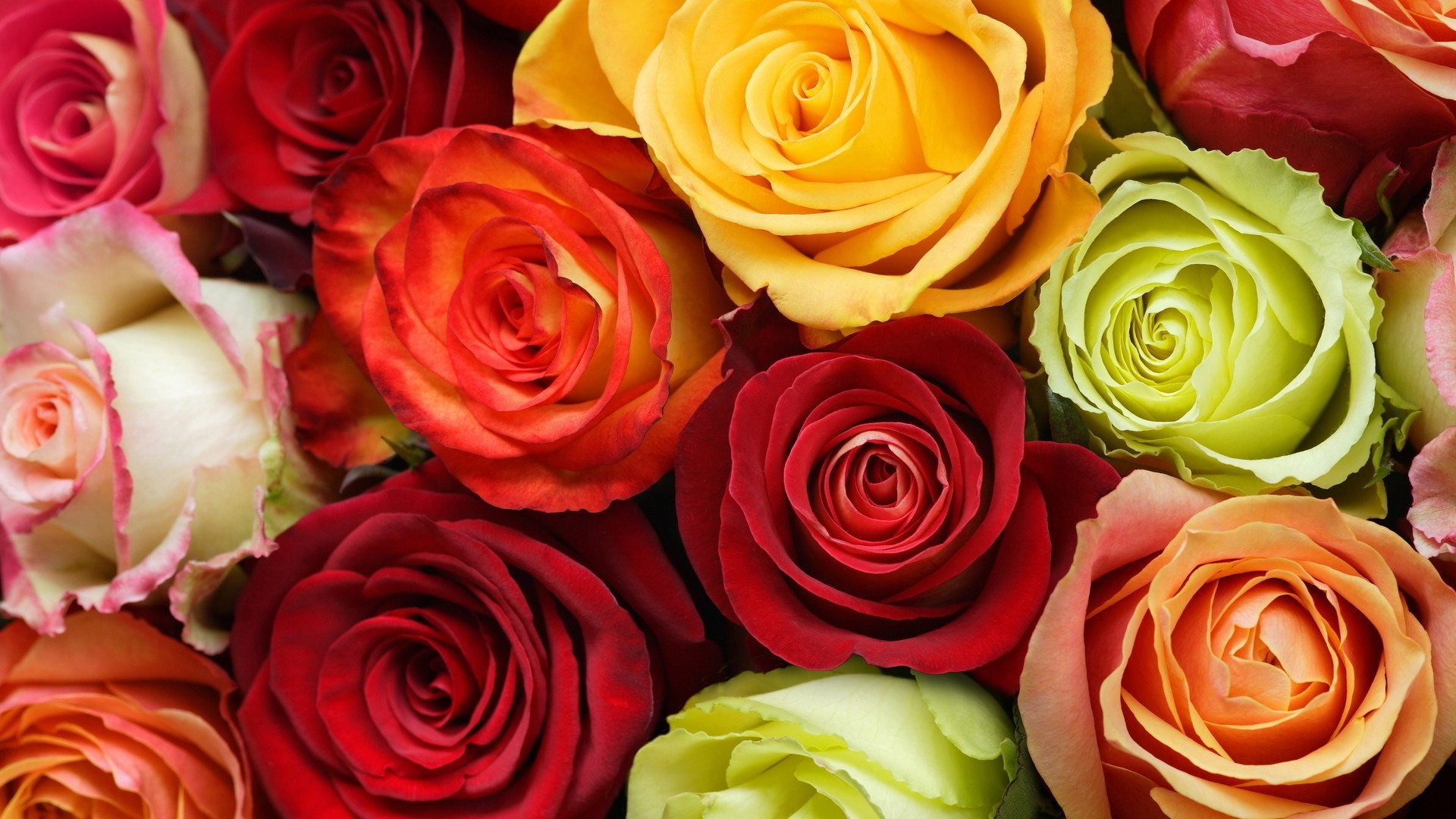 Life archives adib behjat for Different color roses bouquet